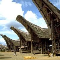 Indonesia Taroja